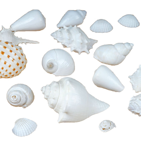28 Pack Tropical Mixed Sea Shells Scatter Decoration Wedding Favor