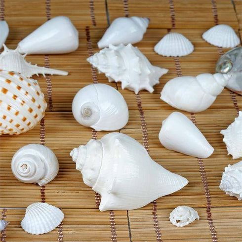 Tropical Mixed Sea Shells - 28/pk