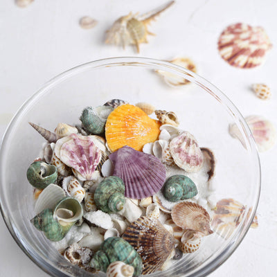 150g | Mixed Natural Seashell Decor | Beach Shells Vase Fillers