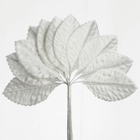 144 Burning Passion Leafs - Ivory
