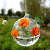 "Set of 4 | 4"" Air Plant Glass Terrarium Graceful Globe Hanging Plant Holders"