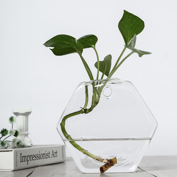 3 Pack - Hexagon Glass Wall Vase - Indoor Wall Mounted Planters - Hanging Terrariums