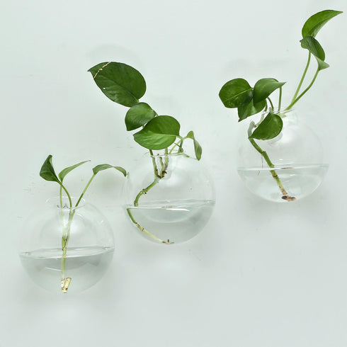 3 Pack - Modish Round Glass Wall Vase - Indoor Wall Mounted Planters - Hanging Terrariums