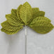 144 Sage Green Burning Passion Leafs