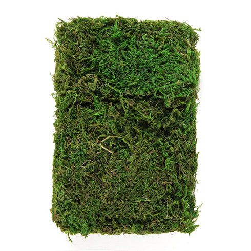 50g/Bag Green Preserved Natural Reindeer Moss