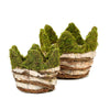 "Set of 2 | Birch Wood Weaved Green Crown Preserved Moss Planter Box - 6"" & 7"""