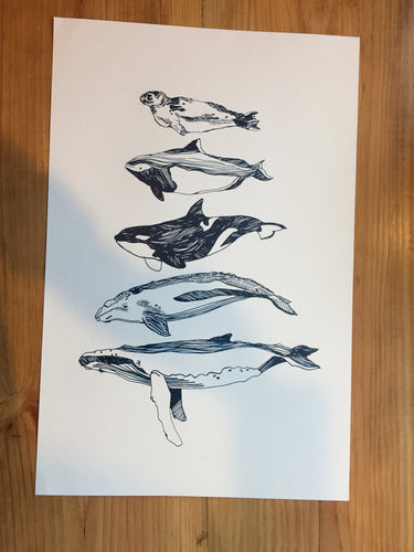 Salish Sea Mammals - Paper print Print Kate