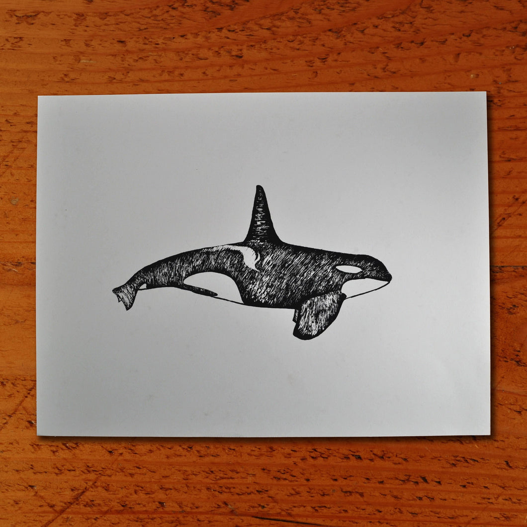 Orca Whale - Paper print Print Andrew