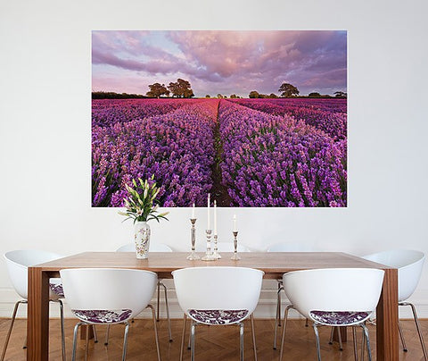 Lavendel Wall Mural - Window Film World