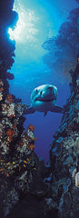 Shark Wall Mural - Window Film World