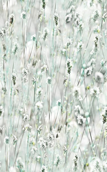 Wildflowers Decorative Window Film - Window Film World