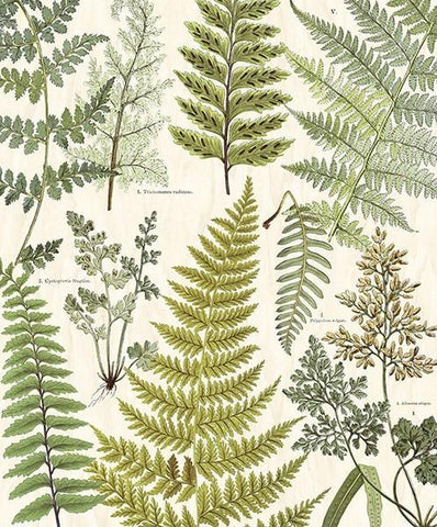 Herbarium Green Wall Mural - Window Film World