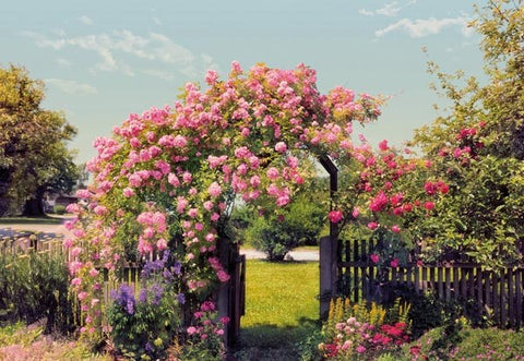 Rose Garden Wall Mural - Window Film World