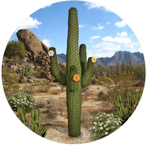 Cactus Screen Door Magnet (5.75x5.75) - Window Film World