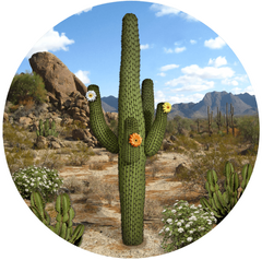 "Cactus Screen Door Magnets (5.75"" x 5.75"") - Window Film World"