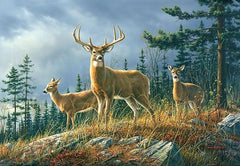 Autumn Whitetail Wall Mural - Window Film World