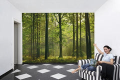 Autumn Forest Wall Mural - Window Film World