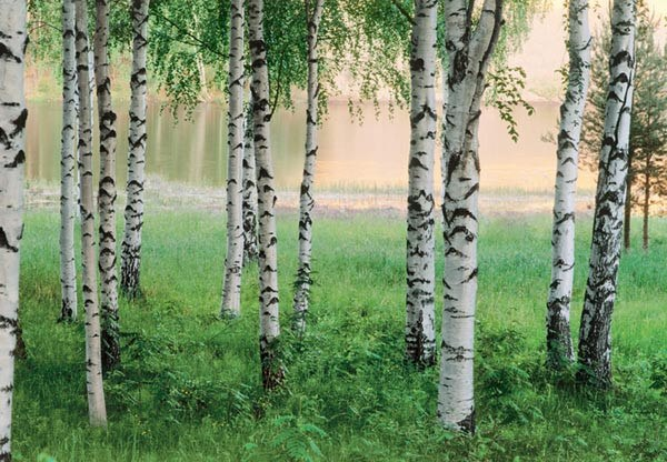 Nordic Forest Wall Mural - Window Film World