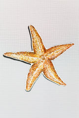 "Starfish Screen Door Saver Magnets (5.5"" x 5.5"" ) - Window Film World"