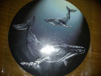 "Humpback Whales Screen Door Savers  (5.75"" x 5.75"") - Window Film World"
