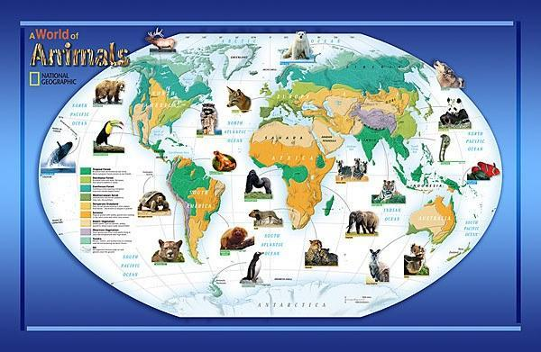 Animals Of The World Wall Mural - Window Film World