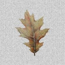 "Oak Leaf Screen Door Saver Magnets (4"" x 5.25"") - Window Film World"