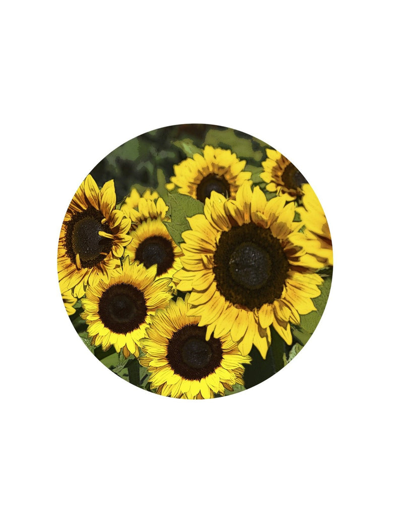 "Sunflower Screen Door Magnets (5.75"" x 5.75"") - Window Film World"