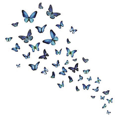 Mariposa Butterfly Wall Art Kit - Window Film World