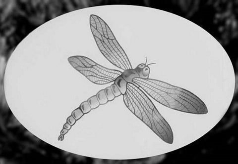 Oval Dragonfly Etched Glass Decal - Window Film World