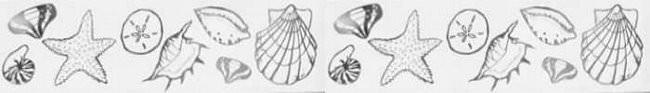 Seashell Border Etched Glass Decals Window Film World
