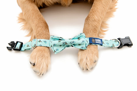 Raceday Dog Collar - Barrel Down South