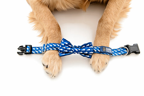 Blue KY Dog Collar - Barrel Down South