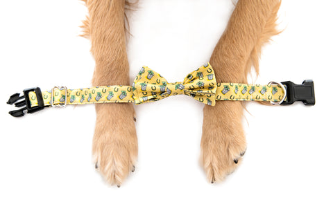 Julep Dog Collar - Barrel Down South