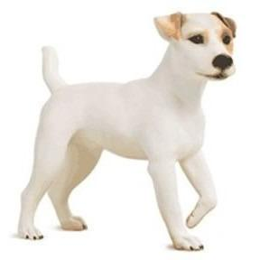 Jack Russell Terrier Realistic Painted Dog Form Mannequin by Goldsmith