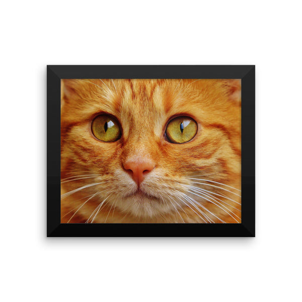 "Remarkable ""Cat Eyes"" Framed photo paper poster"