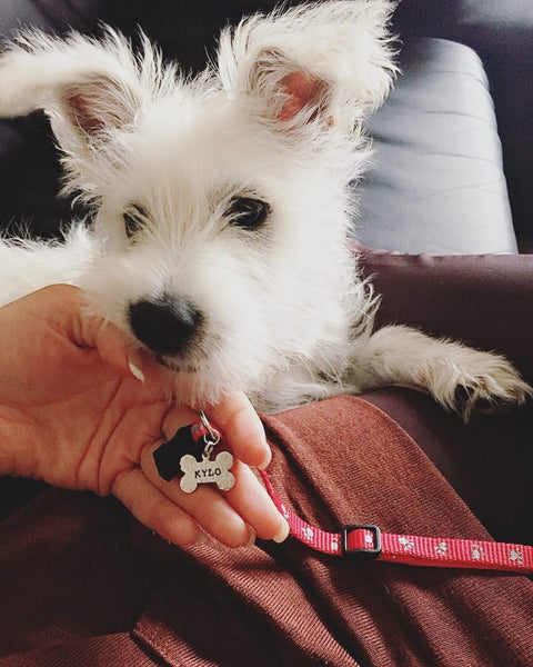 Mini Dog ID Tag
