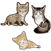 Cute Cats Set of 3 Decals [009]-Animals-Decal Venue