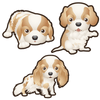 Cavalier King Charles Spaniel Dog Set of 3 Decals-Animals-Decal Venue
