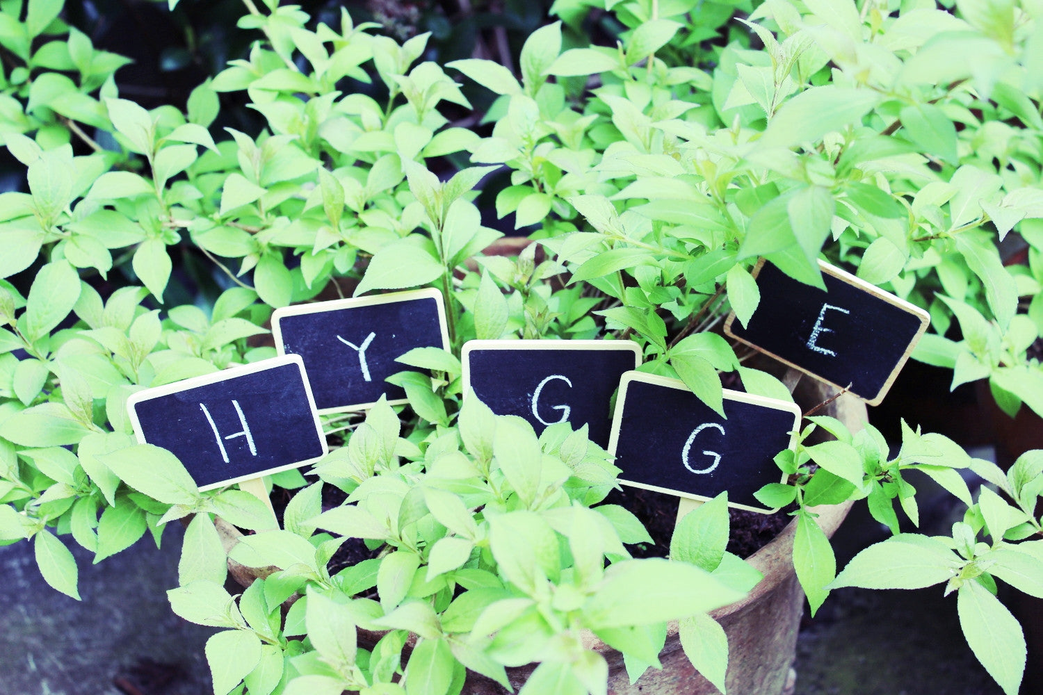 What's Hygge?