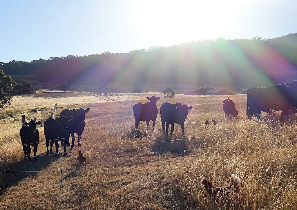Pasture raised free range beef