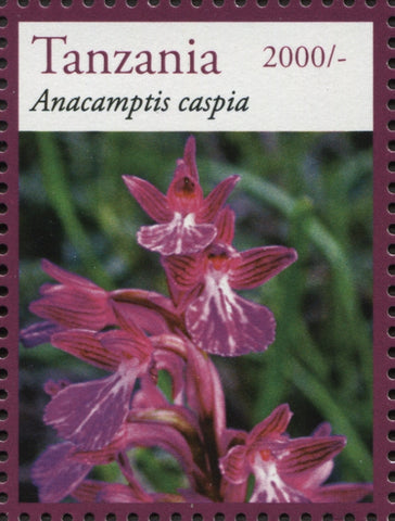 Anacamptis Caspia - Philately Tanzania stamps