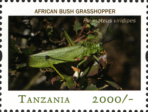 African Bush Grasshopper - Philately Tanzania stamps