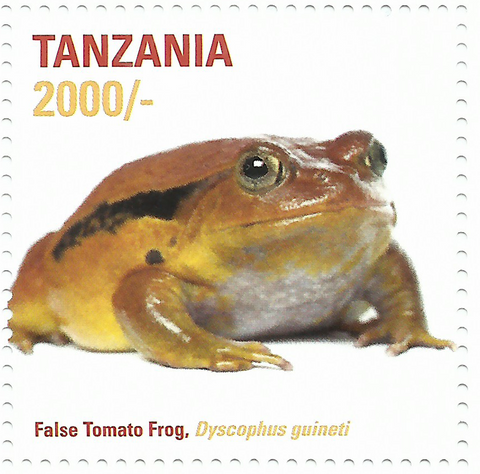 African Frogs- False Tomato - Philately Tanzania stamps