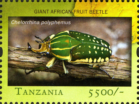 Fauna Insects -Giant African Fruit Beetle - Philately Tanzania stamps