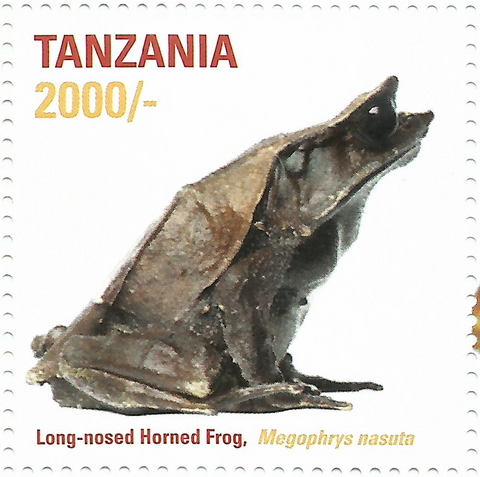 African Frogs Long-nosed Horned - Philately Tanzania stamps