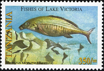 Fishes of Lake Victoria - Mormyrus - Philately Tanzania stamps