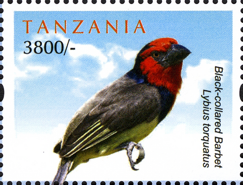 Black-collared Barbet - Philately Tanzania stamps