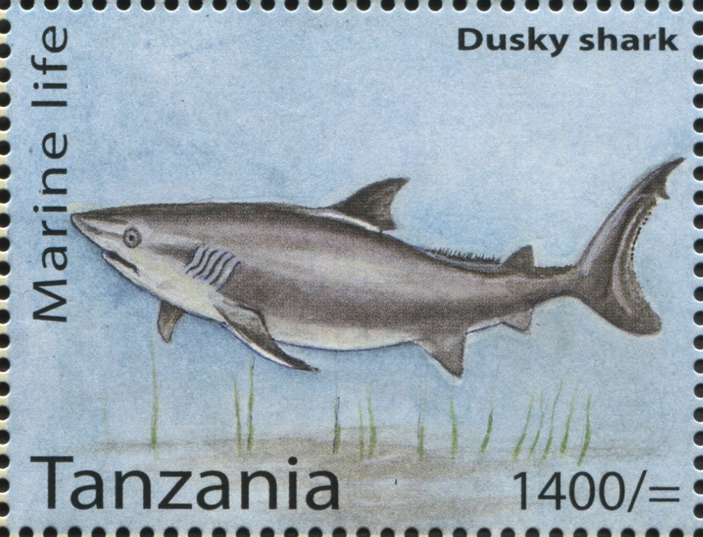 Marine Life - Dusky shark - Philately Tanzania stamps