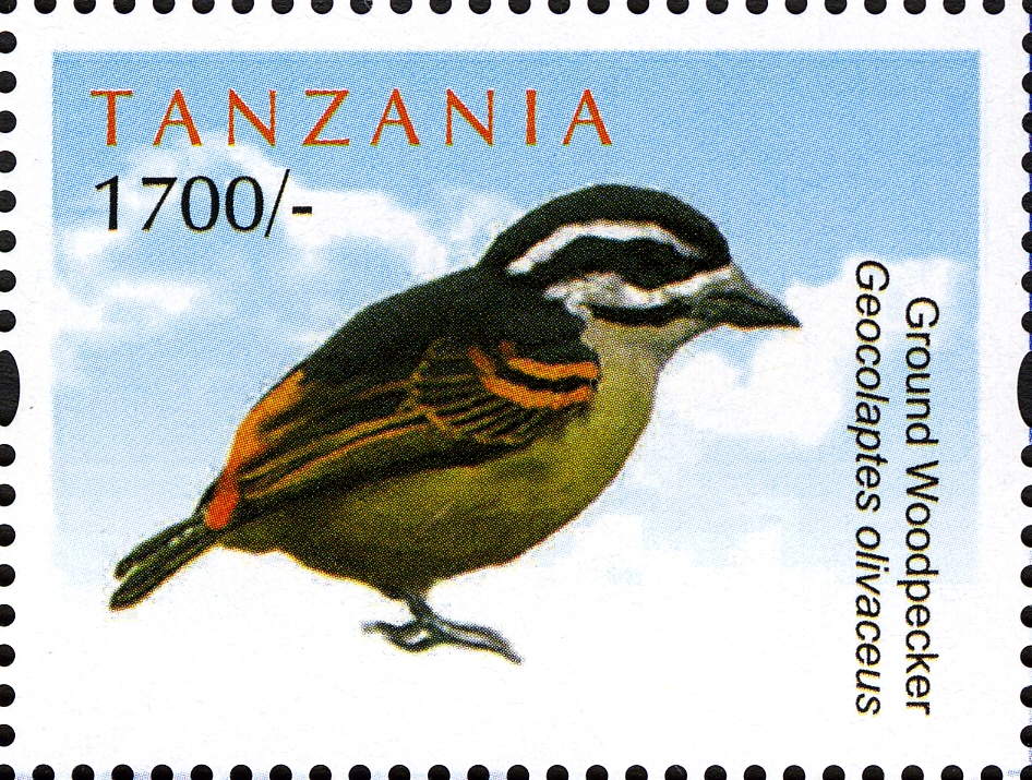 Ground Woodpecker - Philately Tanzania stamps