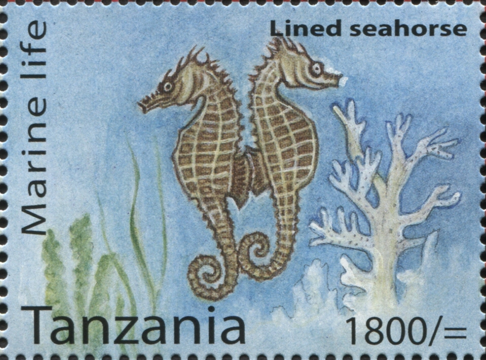 Marine Life - Lined Seahorse - Philately Tanzania stamps